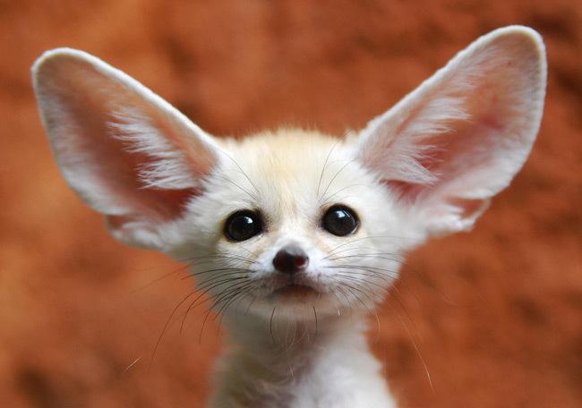 big-ears social listening tuti